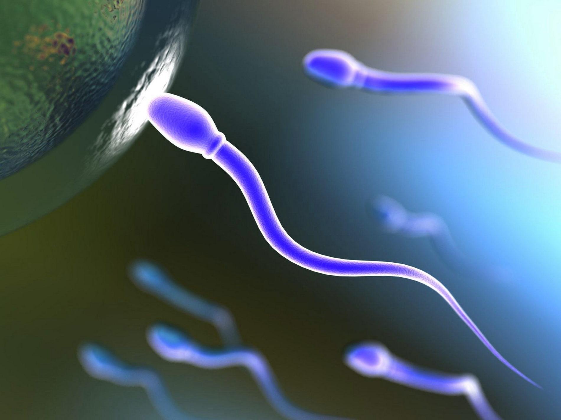 Paternita' a Rischio – Sigarette Tossiche per gli Spermatozoi
