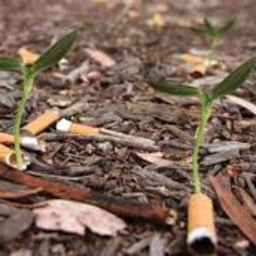 I mozziconi che non fanno germogliare le piante